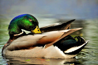 Birds and Waterfowl